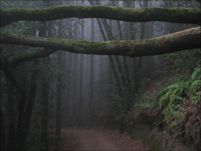 Dense and Gloomy, These Forests Make a Scary Sight