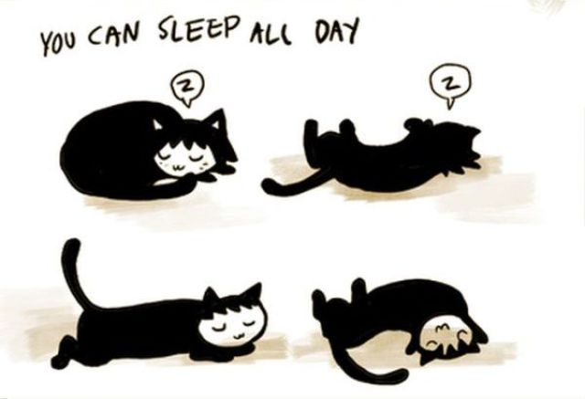 It's Really a Cat's Life!