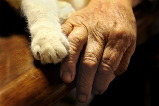 http://img.izismile.com/img/img5/20121109/640/special_friends_granny_and_her_cat_640_24.jpg