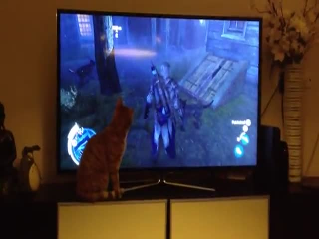 Cat in Disarray Because of Dogs in Assassin's Creed 3