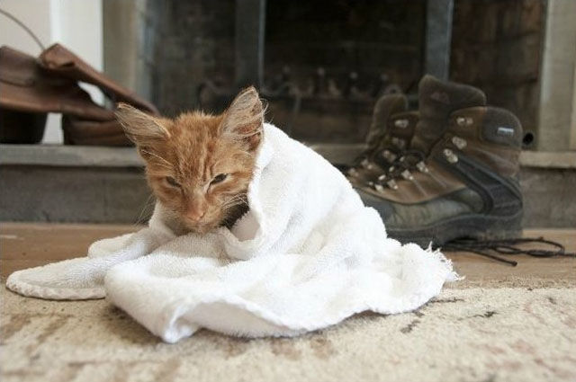 Abandoned Kitty Gets New Lease on Life
