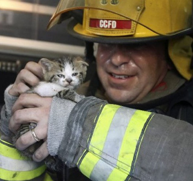Firemen Rescue Cute and Cuddly Cats!