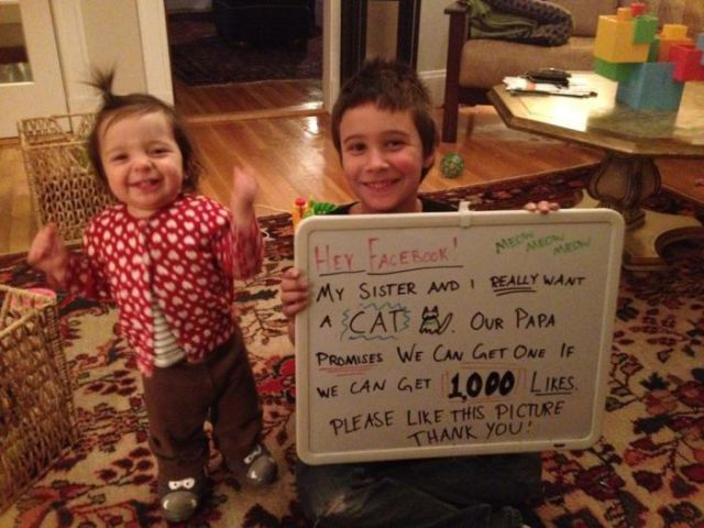 Find out How Social Media Helped These Siblings Get a Cat