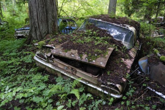 A Forest Burial Place for Abandoned Cars