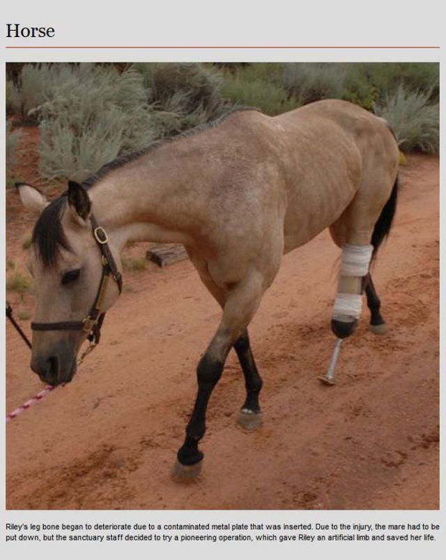 Prosthetics Give Animals a Second Chance at a Normal Life