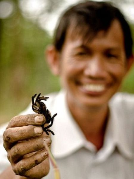 Tarantulas Are a Tasty Treat for Cambodian Children