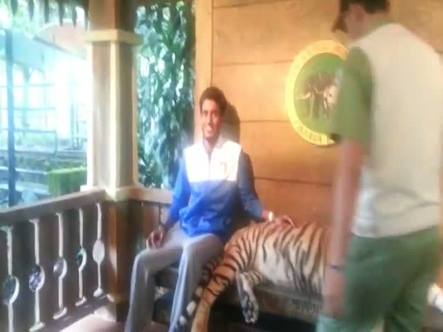 Gotta Be Brave to Pose with a Tiger