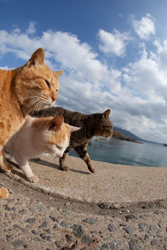 This Japanese Island Is an Idyllic Haven for Cats