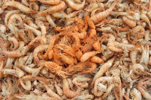 So That's How Shrimp Get Their Bright Colour in China…