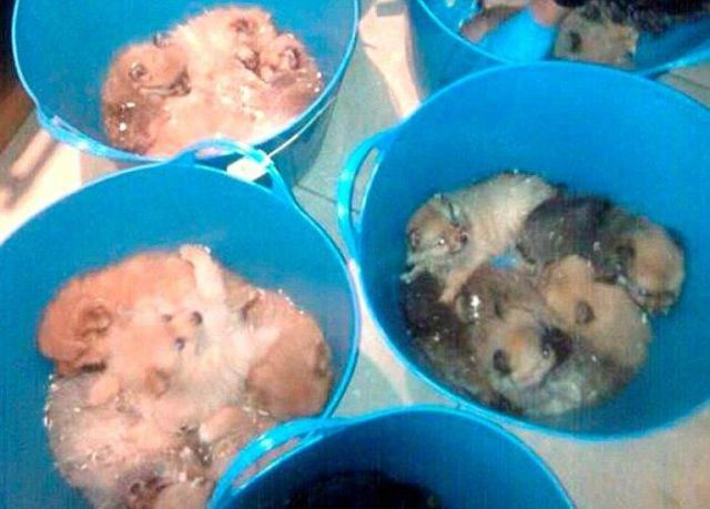 Puppy Traffickers Apprehended