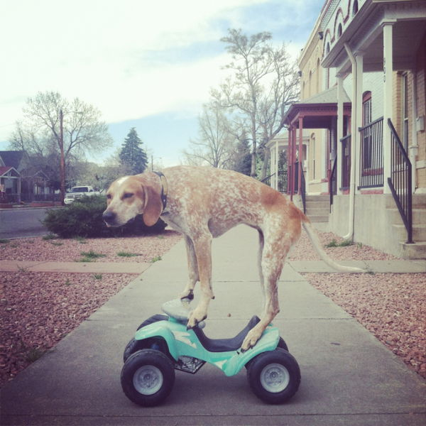 The Most Cool, Calm and Collected Dog in the World