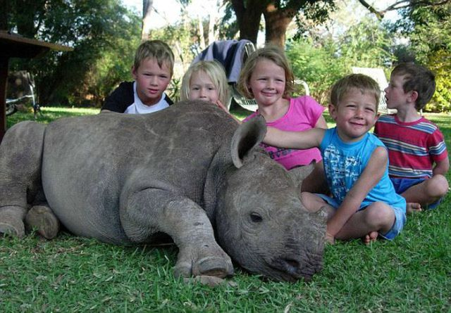 Rescued Baby Rhino Is Just One of the Family