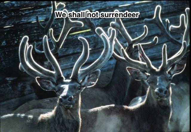 We shall not surrendeer