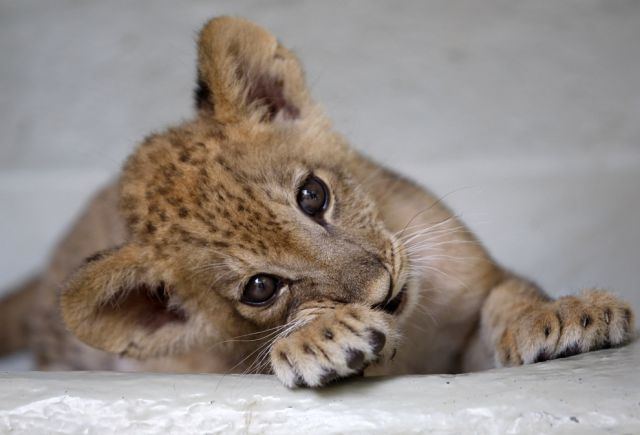 The Most Adorable Baby Animals of the Year
