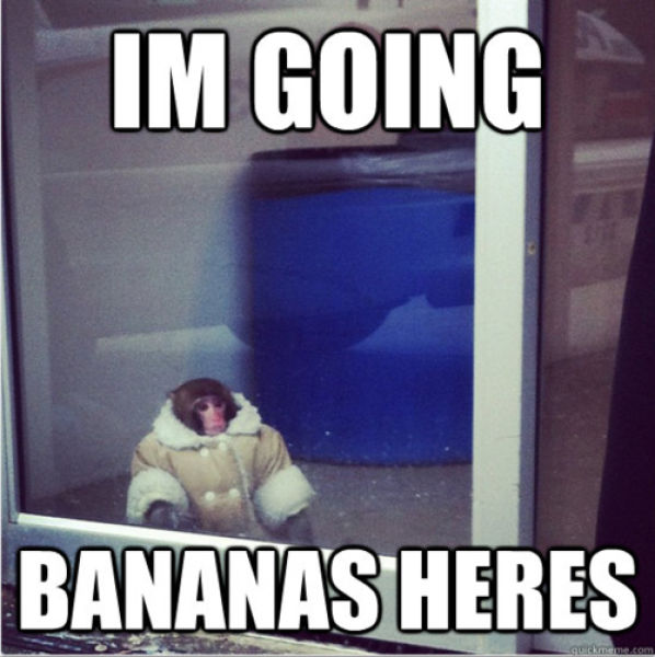 The Stylish Ikea Monkey
