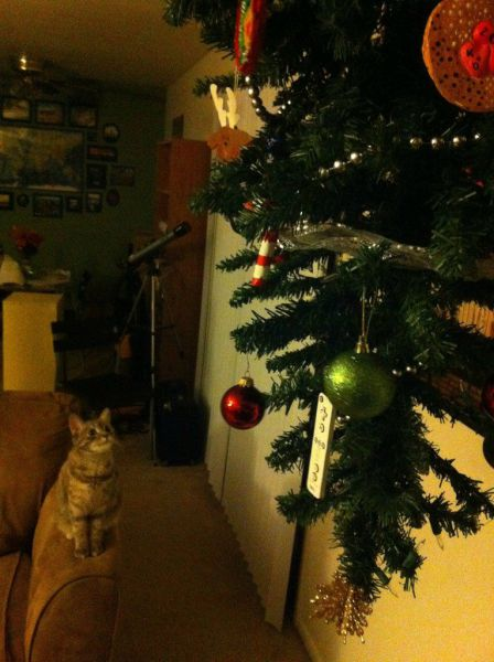 How to Protect Your Christmas Tree from Pesky Pets