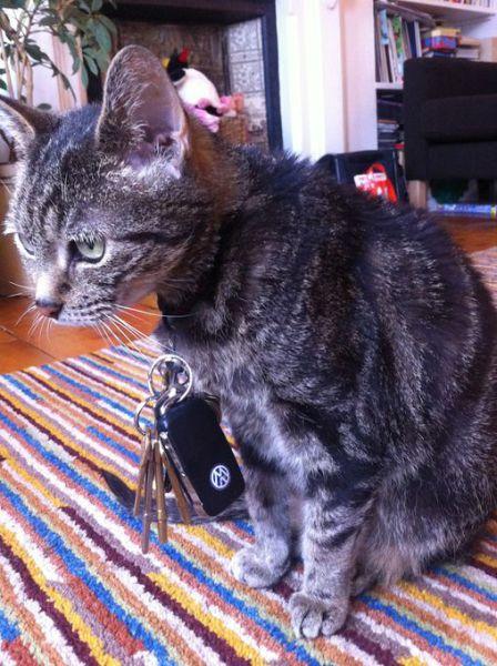 Unwitting Cat Burglar