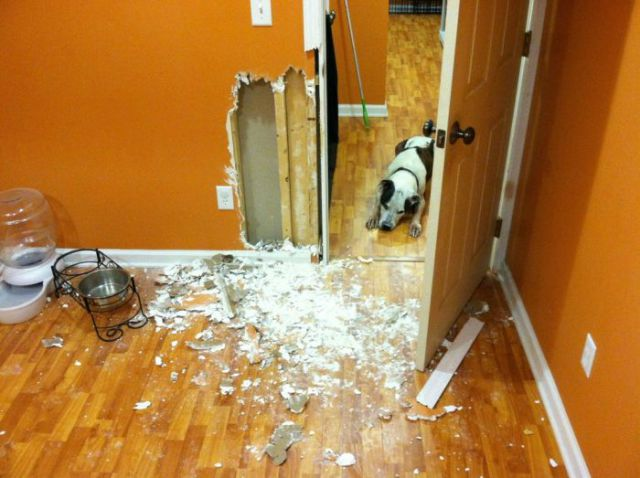 Dog Gives the Wall of His Owner's House a Makeover