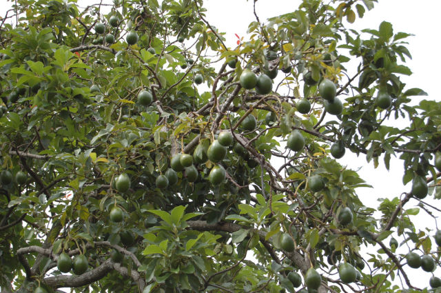 The Plants and Trees That Give Us Fruit