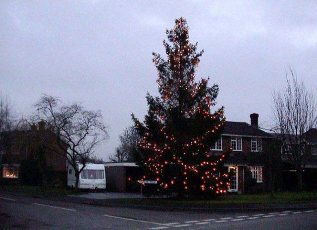 This Small Christmas Tree Grew to Amaze the Whole Town
