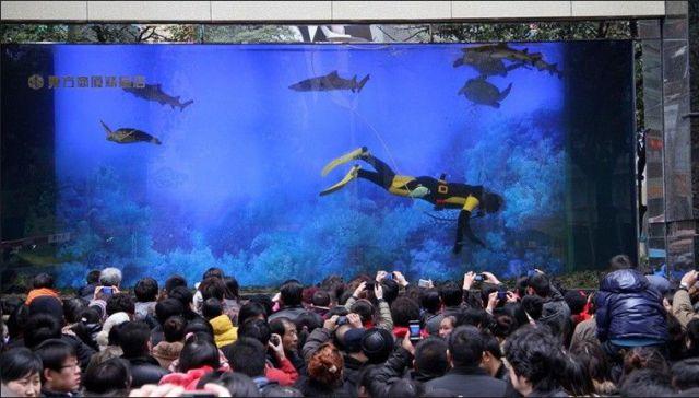 Shark Tank Breaks Injuring Many