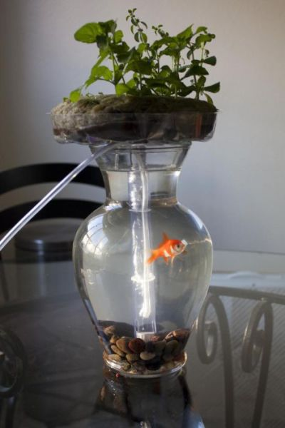 This Aquarium Maybe the Reason to Get a Goldfish