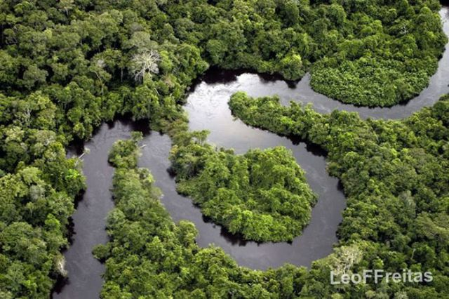 Breathtaking Shots of The Amazon Forest