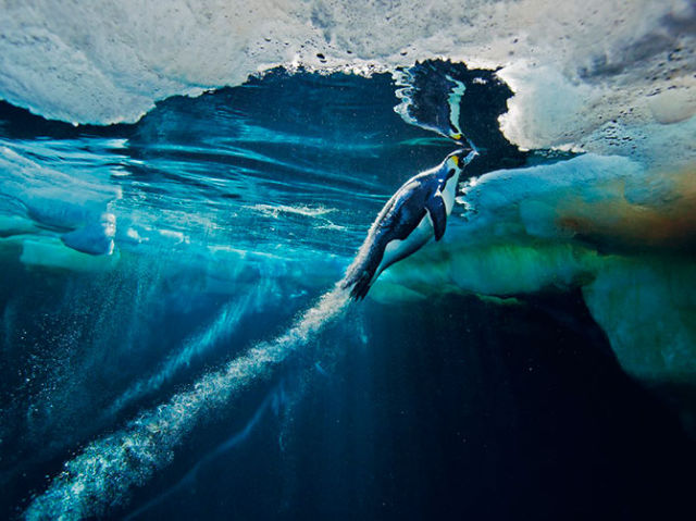 The Best of National Geographic for 2012