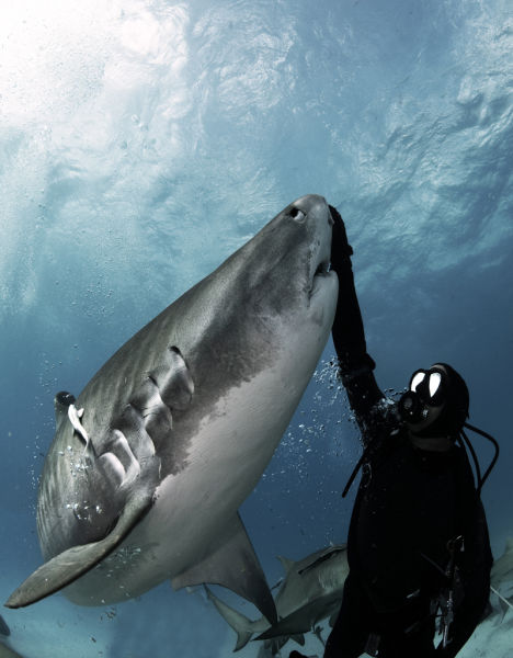 Great Shark Diving Images