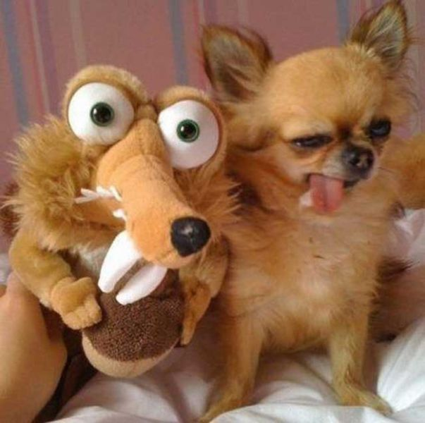 The Best WTF Animals Pictures for 2012