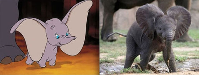 Animal Animations in Real Life