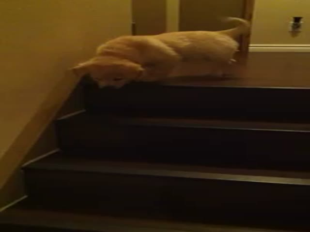 Dog Teaches Puppy How to Go Down Stairs