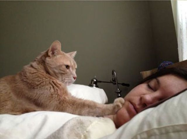 A Cat's Guide to Waking People Up