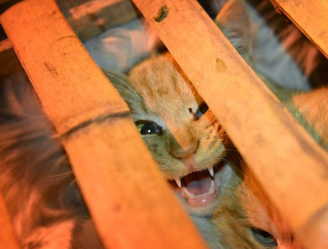 Over 1000 Cats Rescued from Cruel Culinary Fate