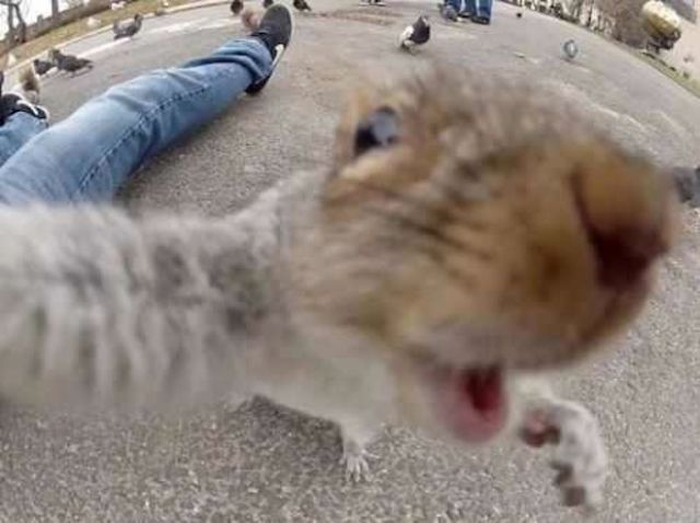 The Ultimate Greatest Selfies Ever