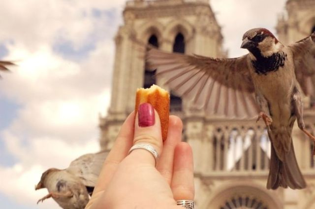 A Clever Way to Get the Perfect Photo Shot