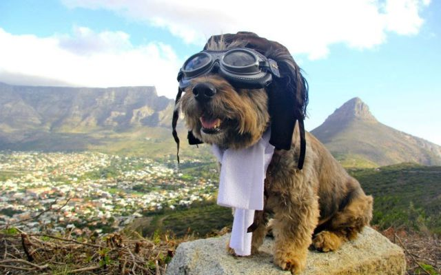 The Amazing Dog Traveler
