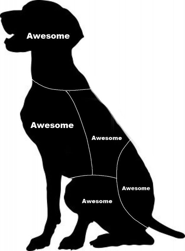 Cat Petting vs. Dog Petting: And the Winner Is…