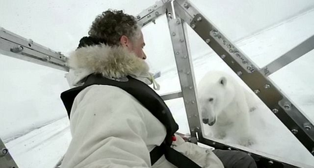 The Calm Before the Storm: Polar Bear Attacks