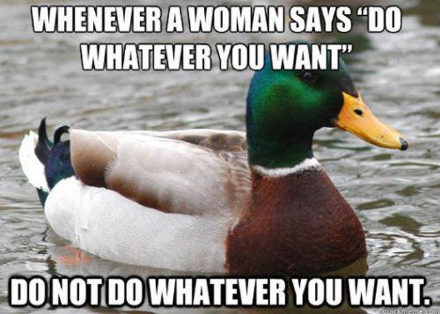 Marvellous Mallard Advice Memes