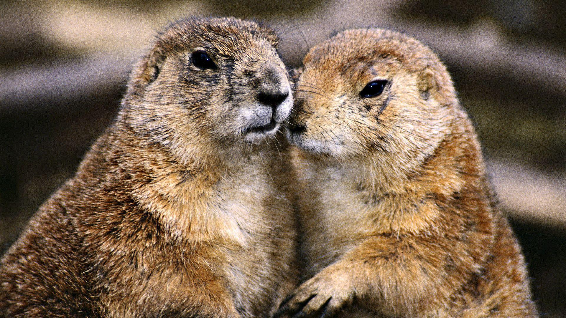 http://img.izismile.com/img/img6/20130128/1000/these_funny_animals_1128_10.jpg
