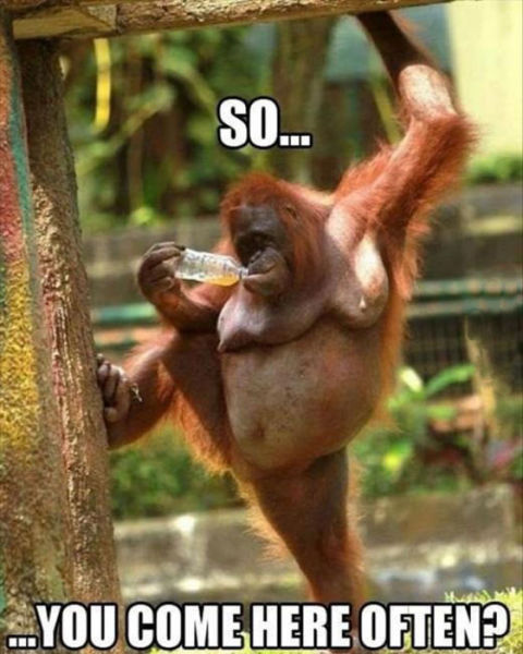 Animals Funny Sexy Meme