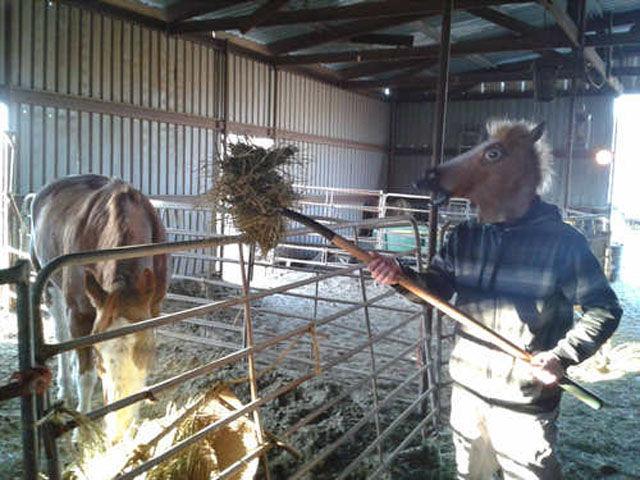 Make Every Work Day Horseplay