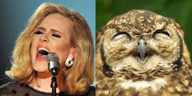 If Pop Stars Were Birds, This Is What They'd Be