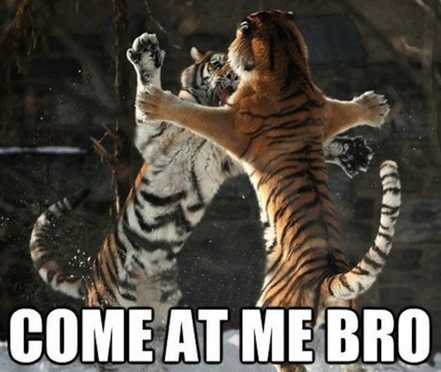 "Animals Who Have the ""Come at me bro"" Nailed"