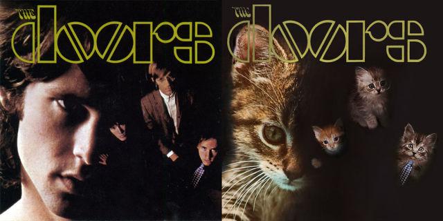 Kitten Inspired Album Art
