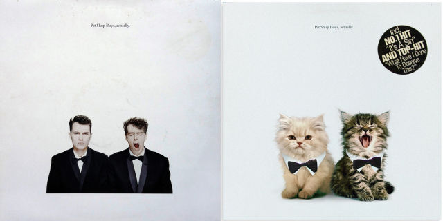 Kitten Inspired Album Art