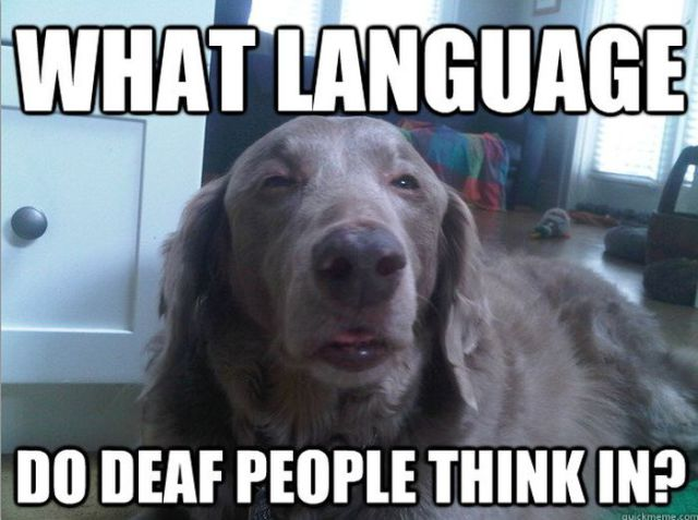 Dogs Say it Best in these Hilarious Memes