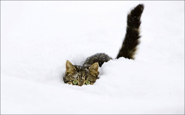 Cats Have Snow Days Too