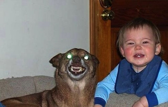 The Most WTF People and Pet Photos Ever